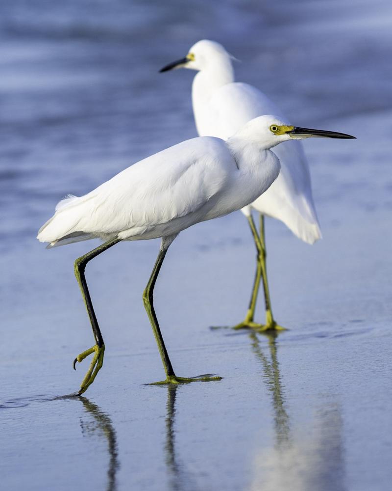 Bird Photography 2